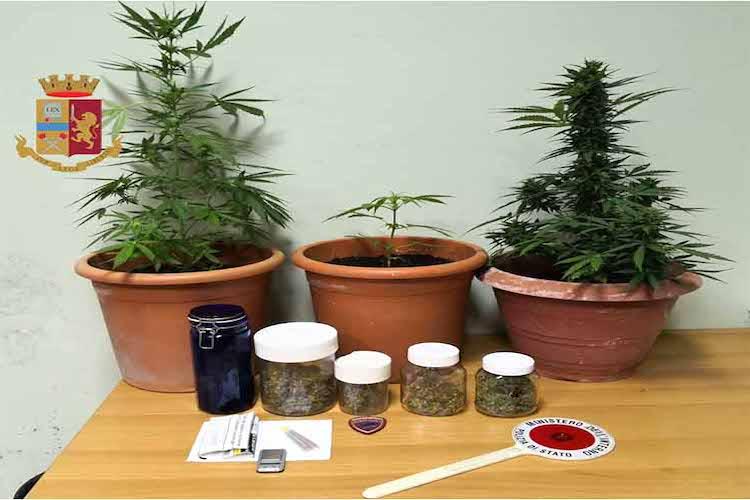 Cinque barattoli di marijuana e tre piante della stessa sostanza trovate in casa di un 23enne