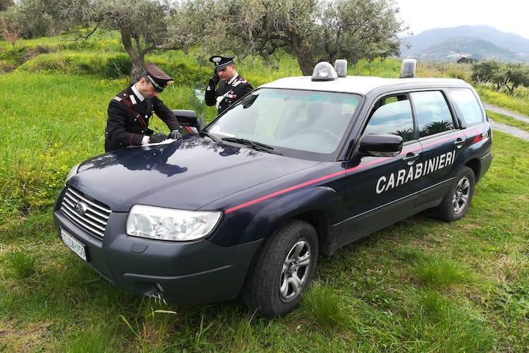 Operaio forestale sorpreso a rubare tronchi di Faggio nell'area protetta del Parco dei Nebrodi