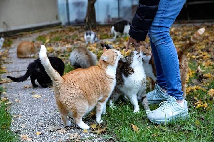 Anziana di Salina dona un terreno al Comune per realizzare un'oasi felina
