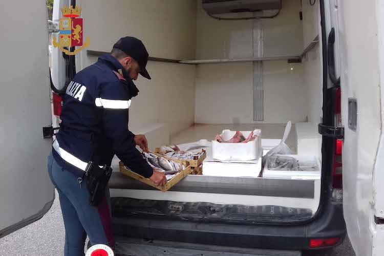 La Polstrada sequestra 50 kg di pesce avariato, scattano multe e denunce